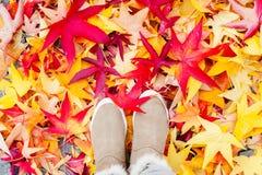 Herbst in der Stadt Manymulticolored-Ahorn-Fallblätter Stockfotografie