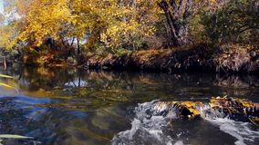 Herbst durch den Fluss stock video