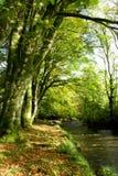 Herbst durch den Fluss Lizenzfreies Stockbild