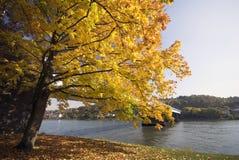 Herbst durch den Rhein Stockfotografie