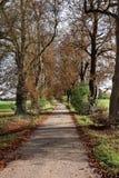 Herbst in einem englischen landwirtschaftlichen Weg Lizenzfreie Stockbilder