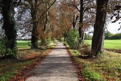 Herbst in einem englischen landwirtschaftlichen Weg Lizenzfreie Stockfotografie