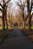 Herbst in einem Park Lizenzfreie Stockfotografie