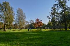 Herbst in einem Park in Amsterdam Lizenzfreie Stockfotos