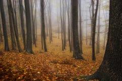 Herbst in einem Wald mit Nebel Stockfotos