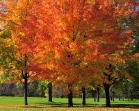 Herbst entlang der östlichen Allee in Ottawa Lizenzfreie Stockfotos