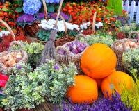 Herbst-Ernte lizenzfreies stockfoto