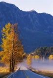Herbst-Espen entlang der Straße stockfotografie