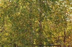 Herbst fängt gerade an, in seine Selbst zu kommen stockfotos