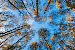 Herbst färbt Baummuster Lizenzfreies Stockbild