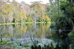 Herbst färbt silbernen Fluss Silver Springs Stockfotos