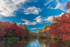 Herbst färbt Teich Stockfotos