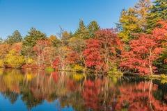 Herbst färbt Teich Stockbilder