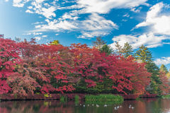 Herbst färbt Teich Stockfotografie