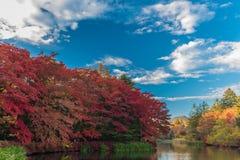 Herbst färbt Teich Lizenzfreies Stockbild