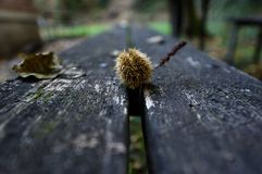 Herbst färbt VIII Stockfotografie