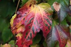 Herbst färbte Blätter Lizenzfreie Stockfotografie