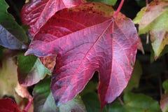 Herbst färbte Blätter Stockfotografie