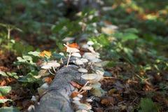 Herbst/Fall in den Wald Lizenzfreies Stockbild