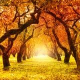 Herbst. Fall. Herbstlicher Park Stockfotografie