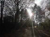 Herbst. Fall sun tree nature stock photos