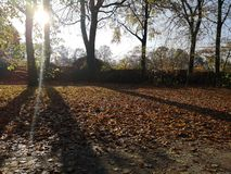 Herbst. Fall sun tree nature stock image