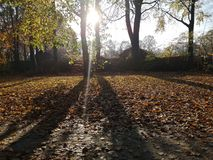 Herbst. Fall sun tree nature royalty free stock photos