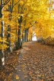 Herbst-/Fallbäume stockbild