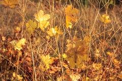 Herbst-fallende Blätter Stockbilder