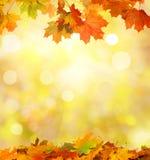 Herbst-fallende Blätter Stockfoto