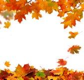 Herbst-fallende Blätter Stockbild