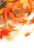 Herbst-fallende Blätter Stockfotografie