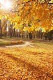 Herbst, Fallhintergrund Stockfotografie