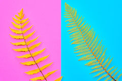 Herbst Fallmode minimal Fern Leaves Tropical Lizenzfreies Stockfoto