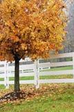 Herbst-Farbe Stockbild