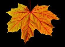Herbst-Farbe stockfotografie