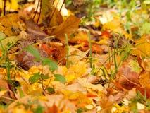 Herbst-Farben lizenzfreies stockfoto