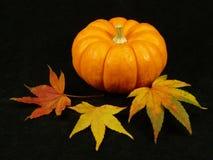 Herbst-Farben Lizenzfreie Stockfotografie
