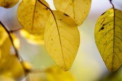 Herbst-Farben Stockfotos