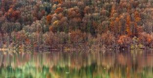 Herbst-Farben Stockfotografie