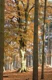 Herbst-Farben Stockbilder