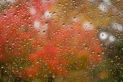 Herbst-Farben durch Regentropfen Stockbild