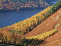 Herbst-Farben durch Thirlmere Stockfotografie