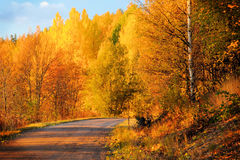 Herbst-Farben in Finnland 3 lizenzfreies stockbild