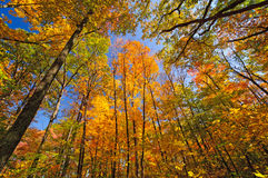 Herbst-Farben im Wald stockfoto