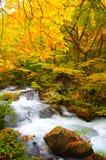 Herbst-Farben von Oirase Fluss Stockbilder