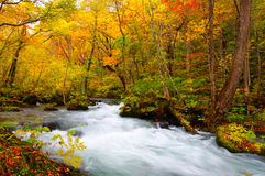 Herbst-Farben von Oirase Fluss Stockbild
