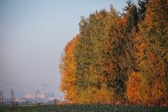 Herbst farbiger Wald mit Stadtweizenmühle im Hintergrund lizenzfreies stockbild