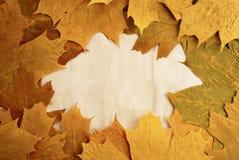 Herbst-Feld Lizenzfreie Stockfotos