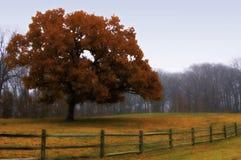 Herbst-Feld lizenzfreie stockbilder